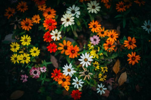 Free stock photo of beautiful flowers, orange color, Yellow color