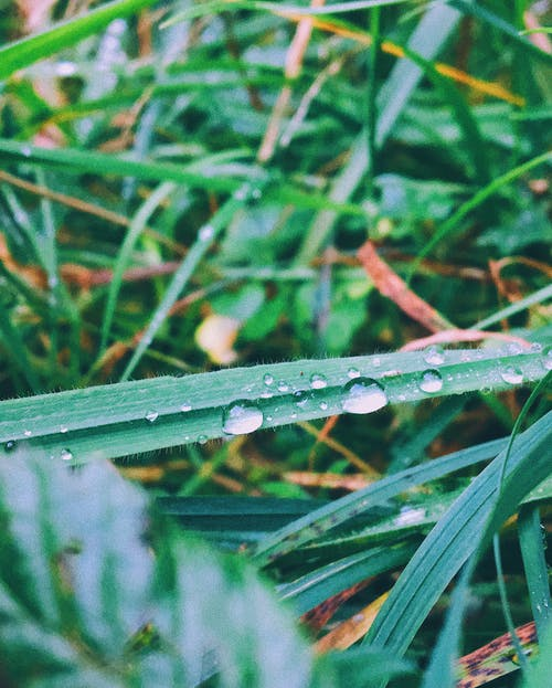 Free stock photo of dew, grass