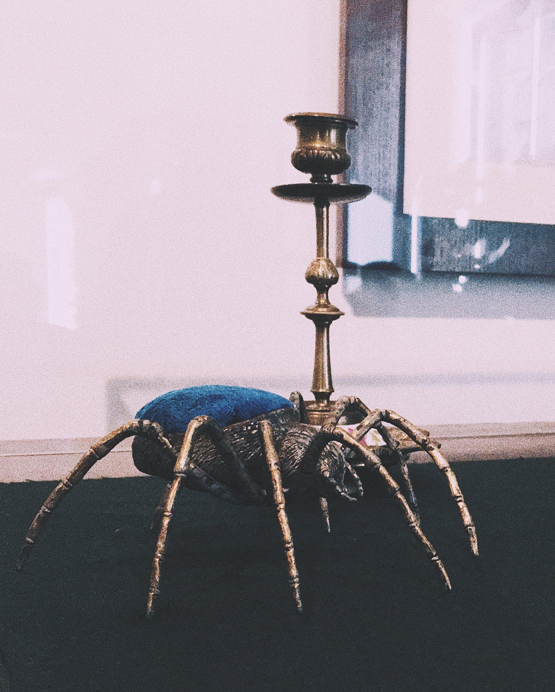 Základová fotografie zdarma na téma kalamář, pavouk
