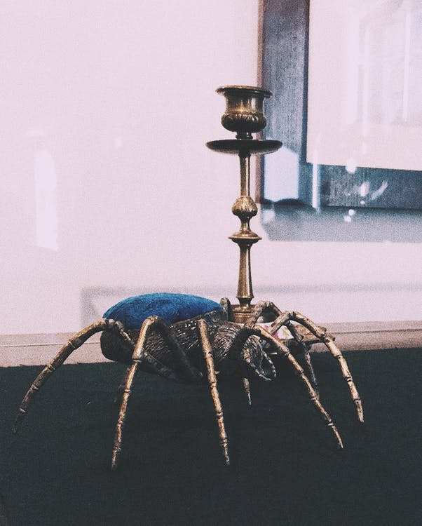 blækhus, edderkop