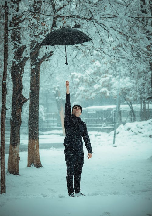 Immagine gratuita di alberi, albero caduto, bellissimo, bianco