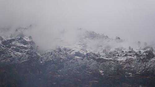 Gratis stockfoto met berg, bomen, heuvel, himachal