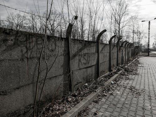 Ảnh lưu trữ miễn phí về bê tông xám, Bức tường bê tông, dây kẽm gai, dây thép gai