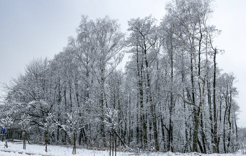 Fotobanka sbezplatnými fotkami na tému chladný, sneh, zasnežené stromy, zima