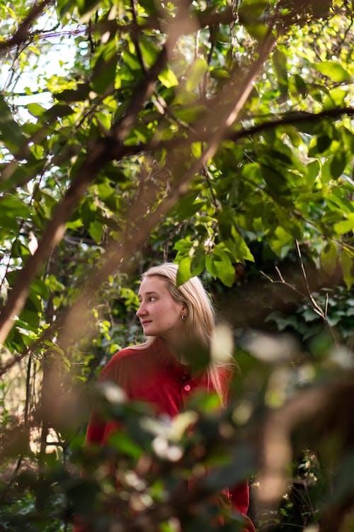 Gratis stockfoto met aantrekkelijk mooi, boom, fotoshoot, groei