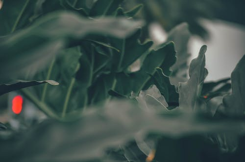 Základová fotografie zdarma na téma krása v přírodě, matka příroda, příroda, zelené listy
