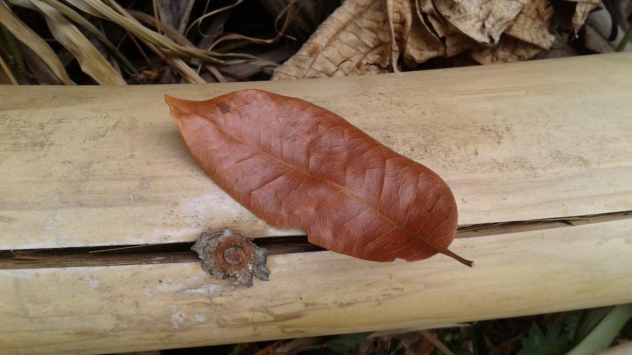 Imagine de stoc gratuită din avizier, bambus, board