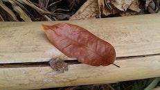 wood, blur, bamboo