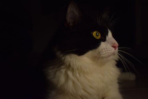 動物愛好者, 拍照片, 照片, 貓 的 免費圖庫相片