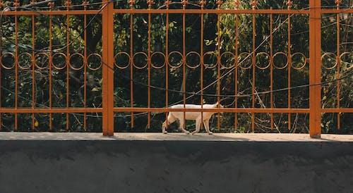 Fotobanka sbezplatnými fotkami na tému 35mm, akcia, domáce zvieratá, fotoaparát Nikon