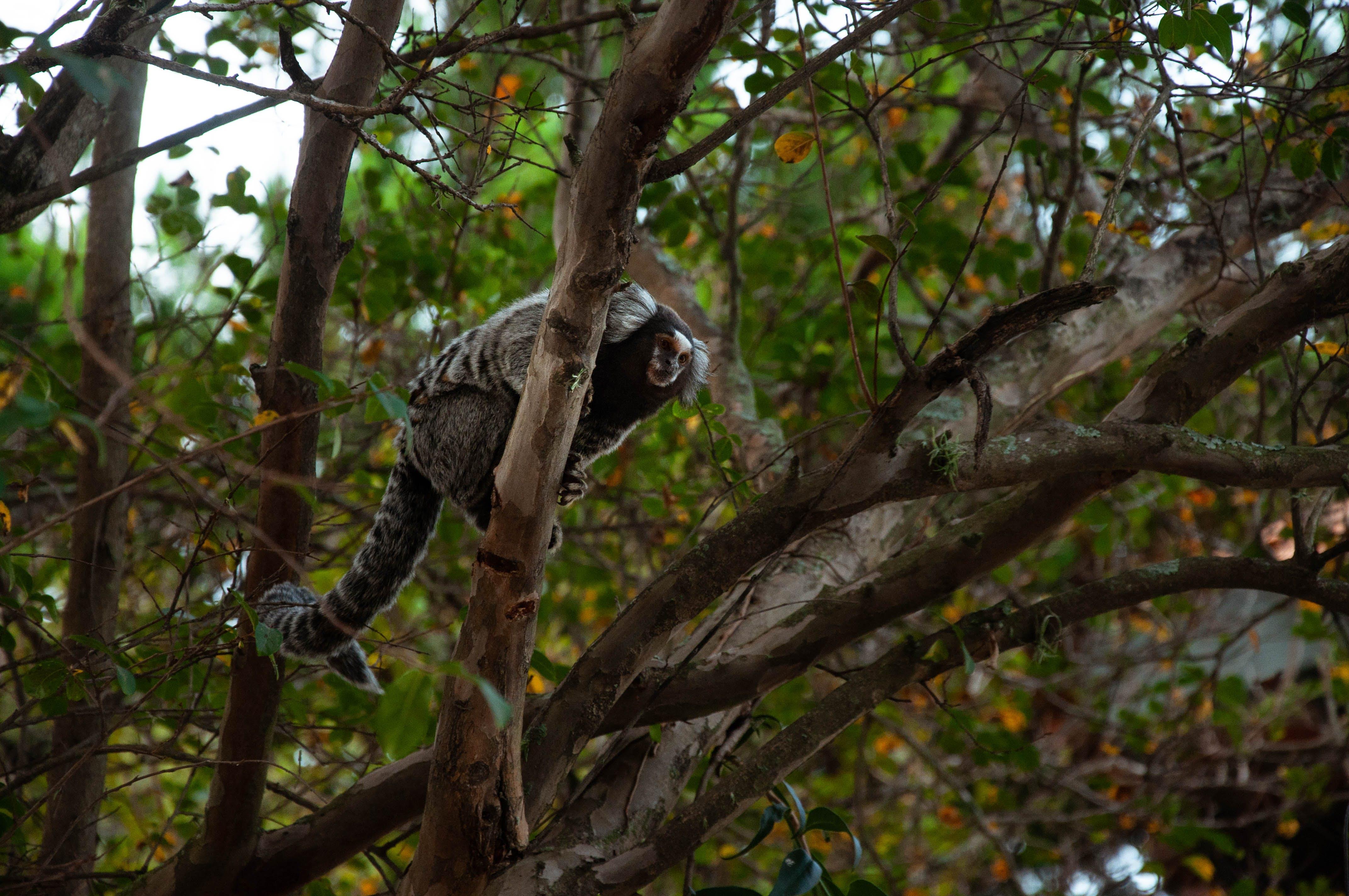 Безкоштовне стокове фото на тему «# три, #animal, #green, #monkey»