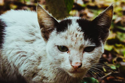 Free stock photo of aggressive, cat, cat eye