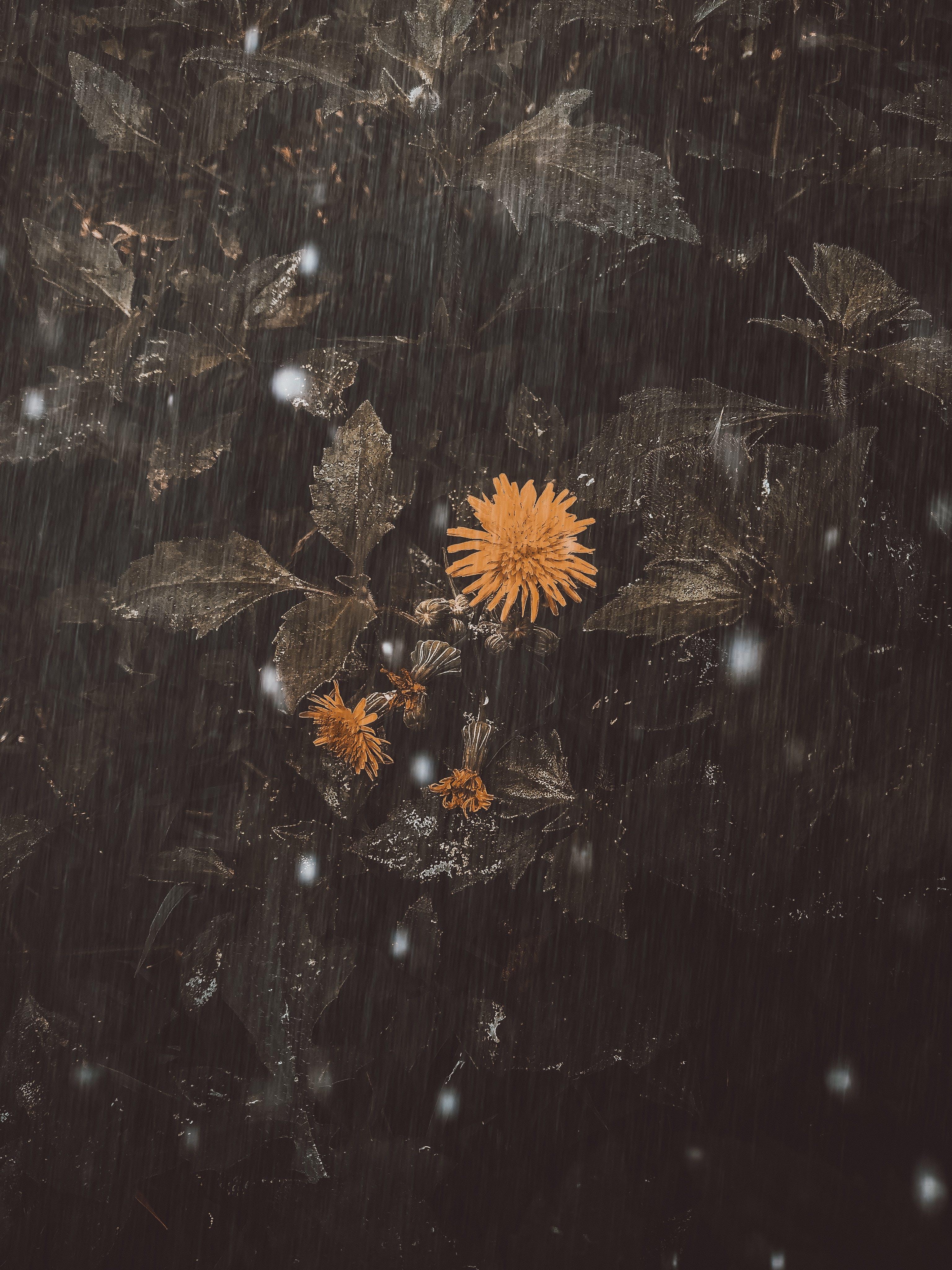 Gratis lagerfoto af flor, lodret