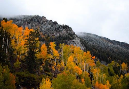 Gratis arkivbilde med alpin, fjell, frost, furutre