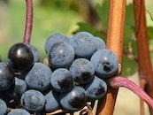 food, blur, grapes