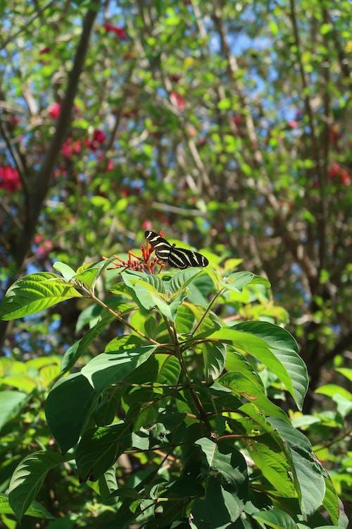 kelebek, zebra, zebra kelebek içeren Ücretsiz stok fotoğraf