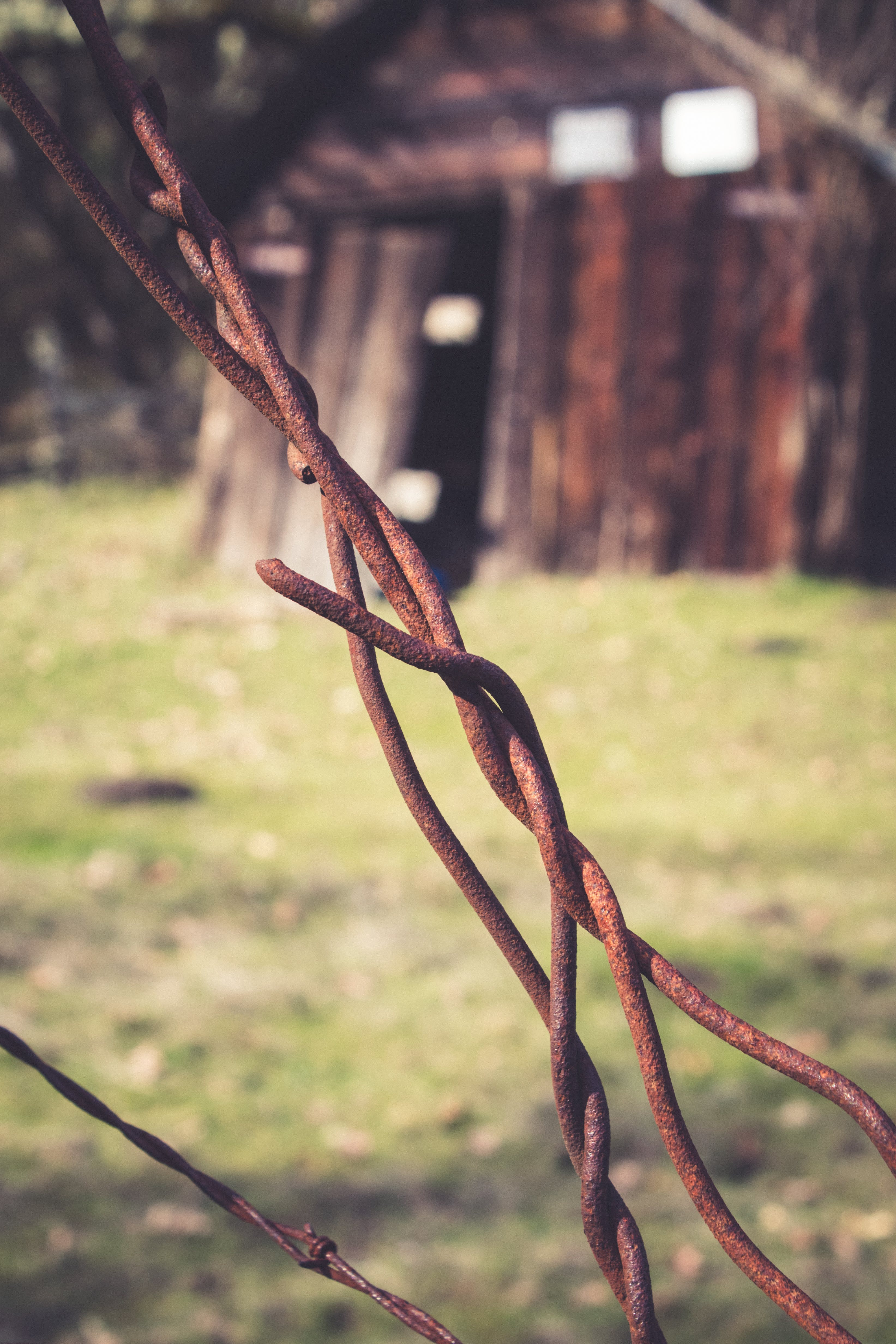 Free stock photo of barbed wire, close up, close-up, decay