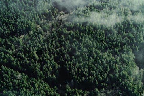 Бесплатное стоковое фото с Аэрофотосъемка, вид сверху, гора, деревья