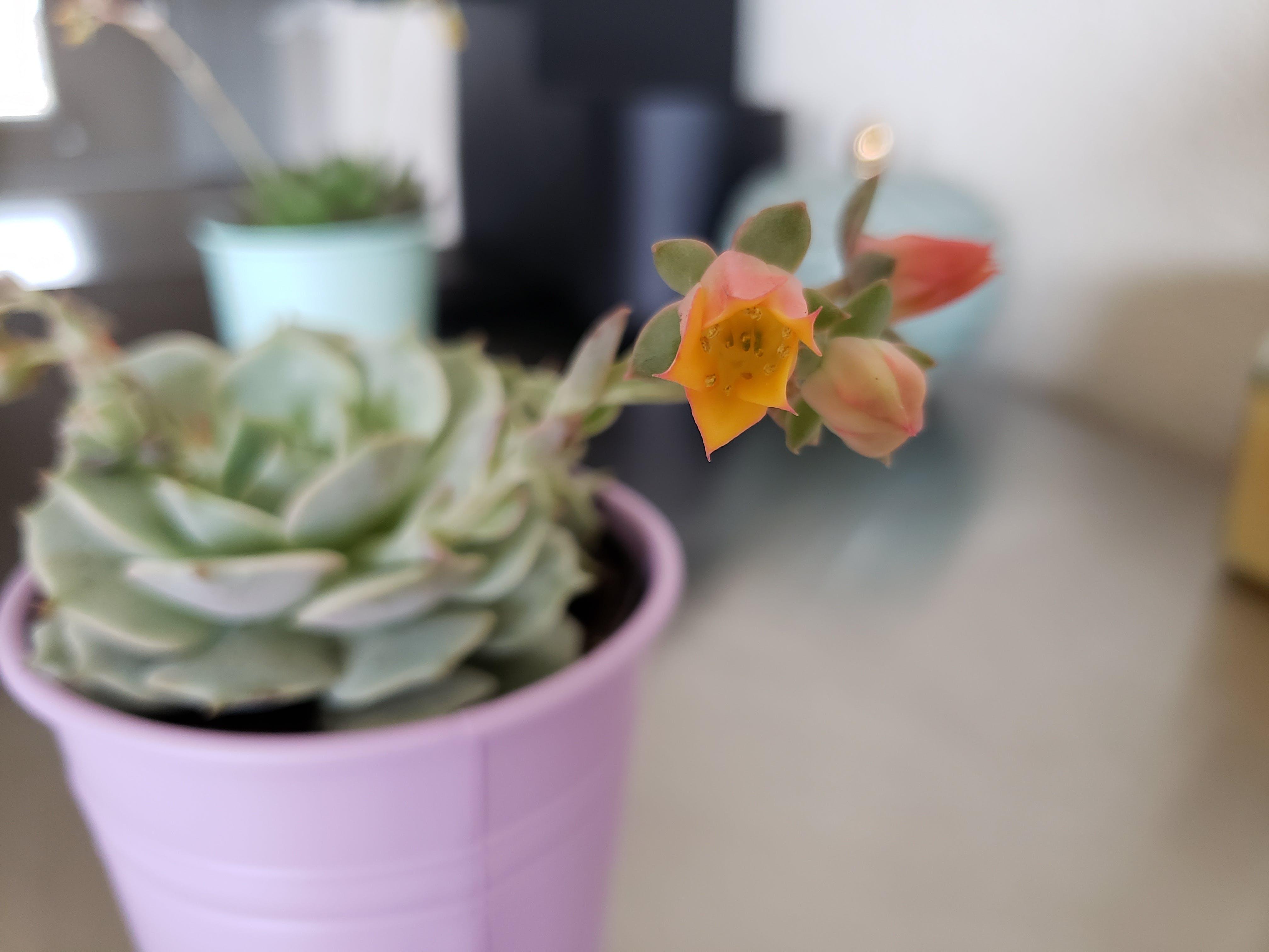 Kostenloses Stock Foto zu blume, blumen, pflanze, pflanzen