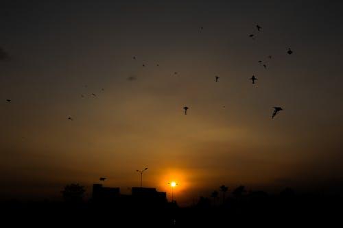 Kostenloses Stock Foto zu #sonnenuntergang, #tracynguyen, #tracynguyenphotoraphy, #vietnamesisch