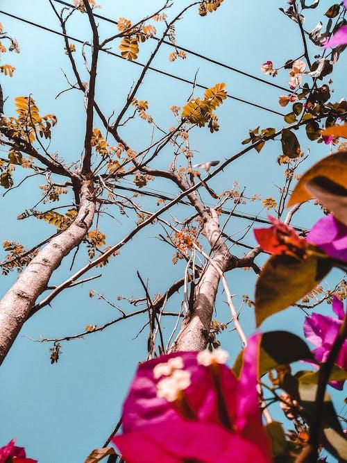 Gratis lagerfoto af appelsin, HD-baggrund, minimal, natur