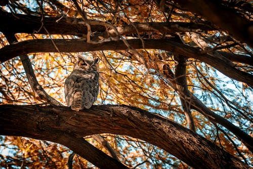 Photo of Owl Perched on Tree Branch