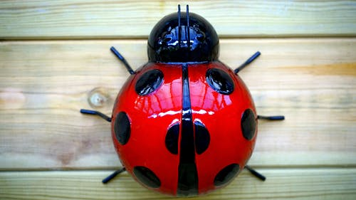 Ladybug Plastic Toy
