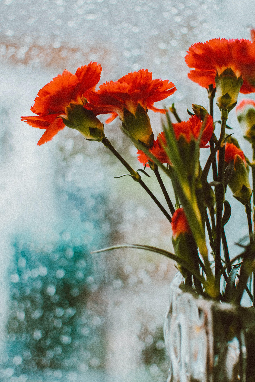 Close-up Photo of Orange-petaled Flowers
