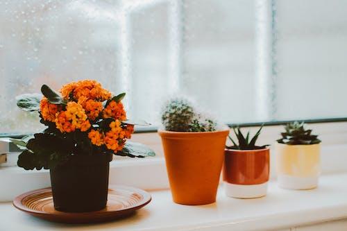 Ilmainen kuvapankkikuva tunnisteilla huonekasvit, kaktus, kasvit, kattilat