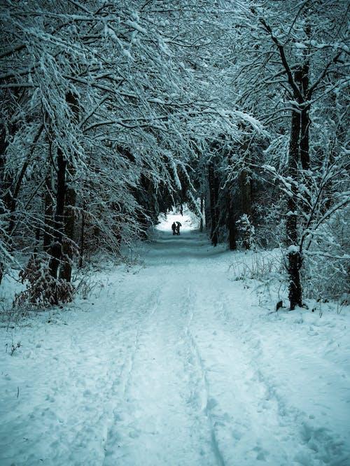 Imagine de stoc gratuită din acoperit, acoperit de zăpadă, albastru, anotimp