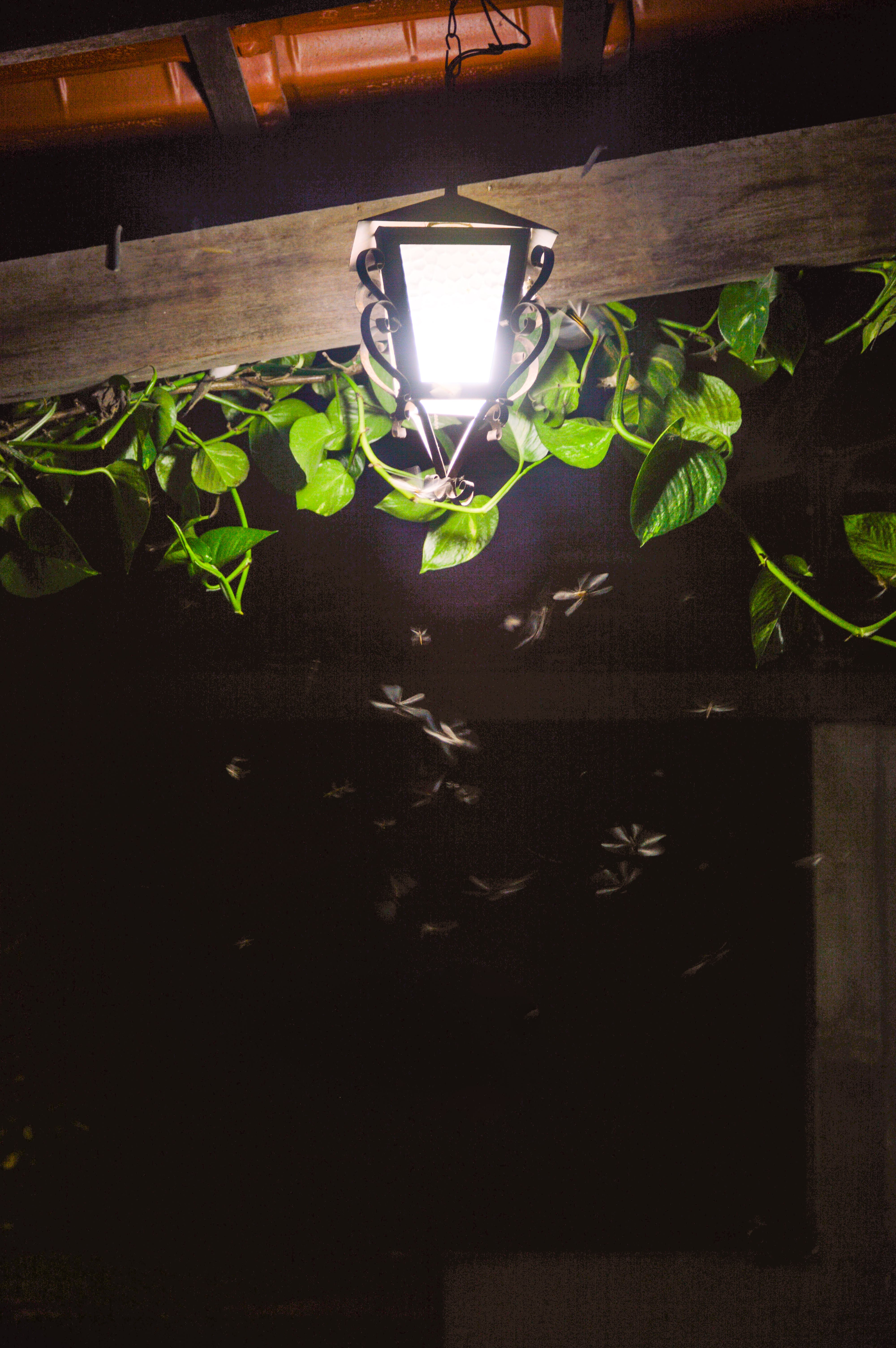 Free stock photo of light, house, leaves, lamp