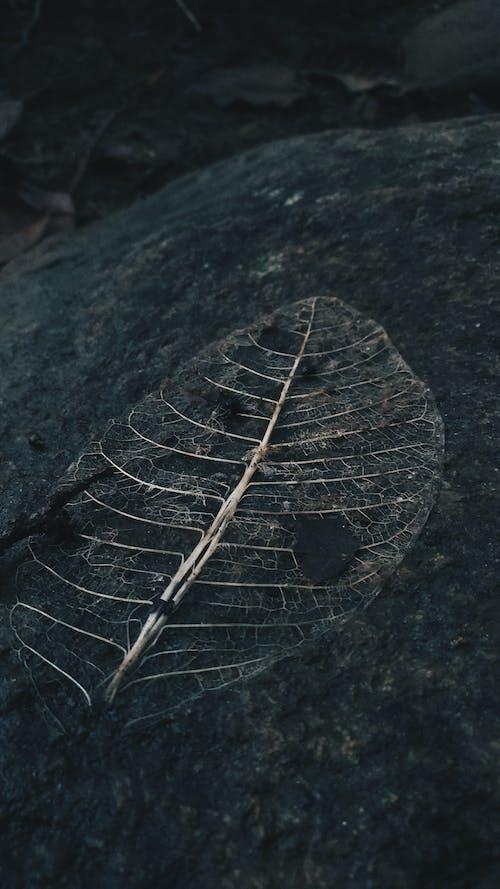 Foto d'estoc gratuïta de natura, planta