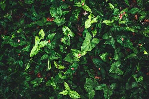 คลังภาพถ่ายฟรี ของ ความงามในธรรมชาติ, ธรรมชาติ, วอลล์เปเปอร์, สีเขียว