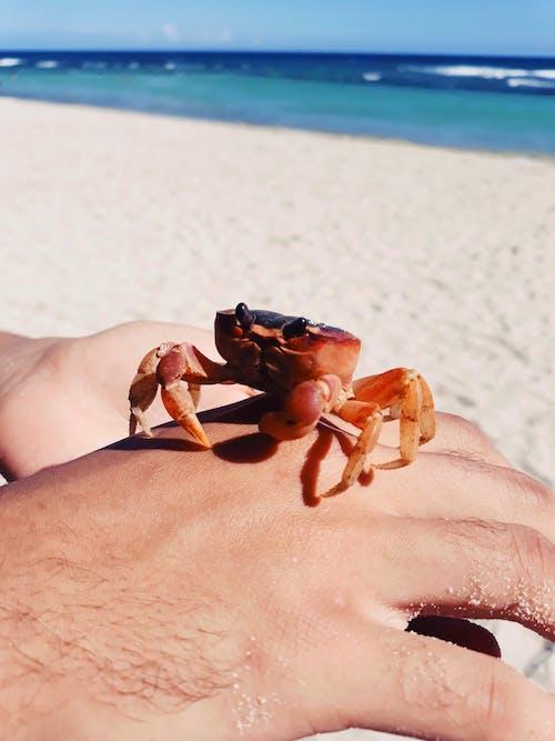 Free stock photo of beach, beautiful, blue sky, crab