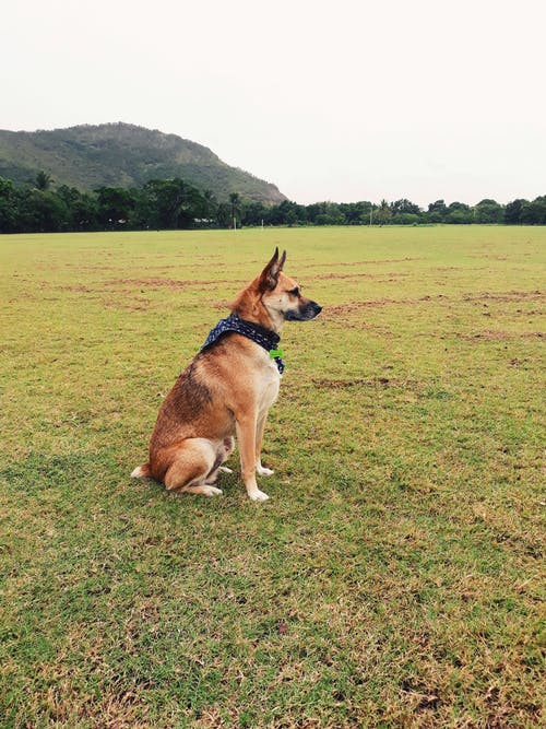 Free stock photo of dog, green, nature