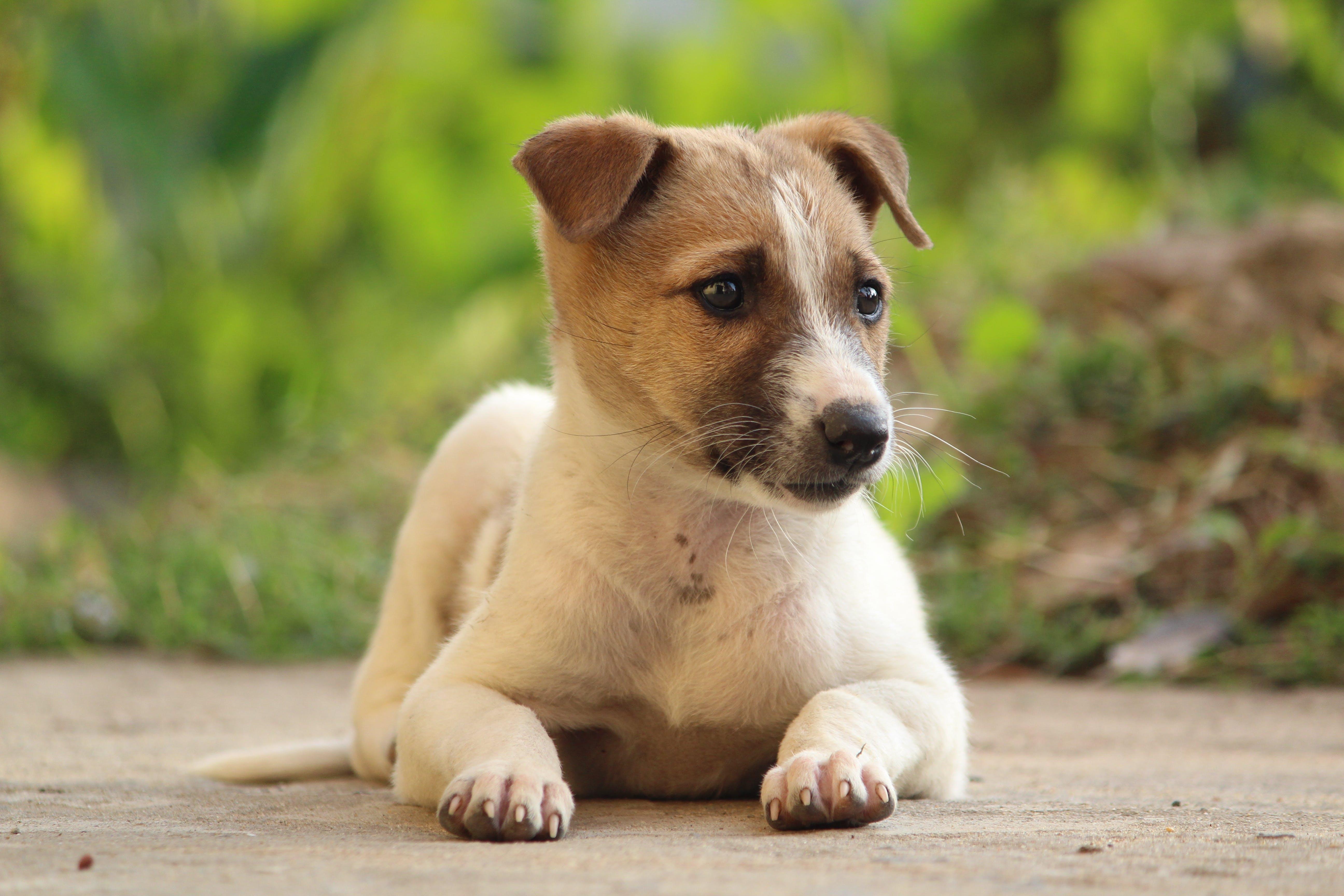 Gratis lagerfoto af dyr, hunde, hvalp