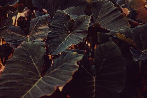 คลังภาพถ่ายฟรี ของ การถ่ายภาพธรรมชาติ, ความงามในธรรมชาติ, ธรรมชาติ, ธรรมชาติอันยิ่งใหญ่