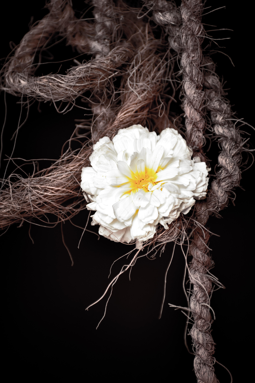 Free Stock Photo Of Flower Evening Macro Nikon