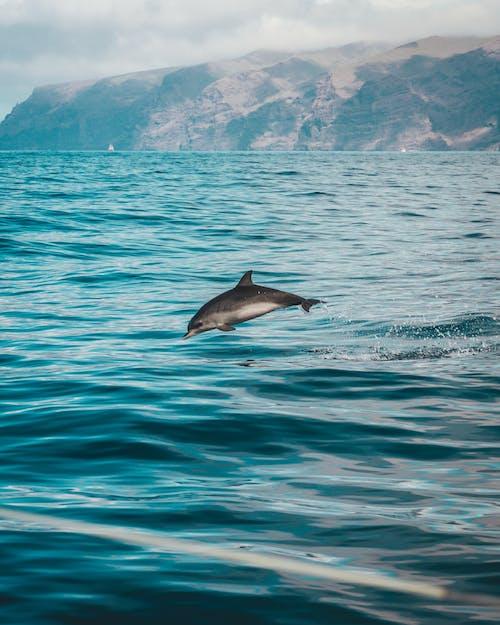 Gratis lagerfoto af atlanterhavet, bjerg, blæser, bølger