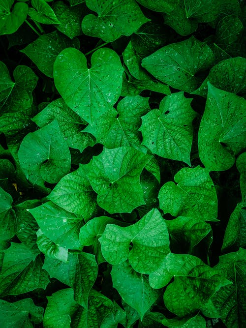 Free stock photo of beautiful, beauty in nature, dark green plants, green