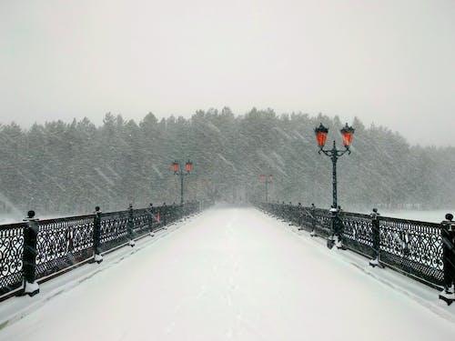 Foto d'estoc gratuïta de nevada