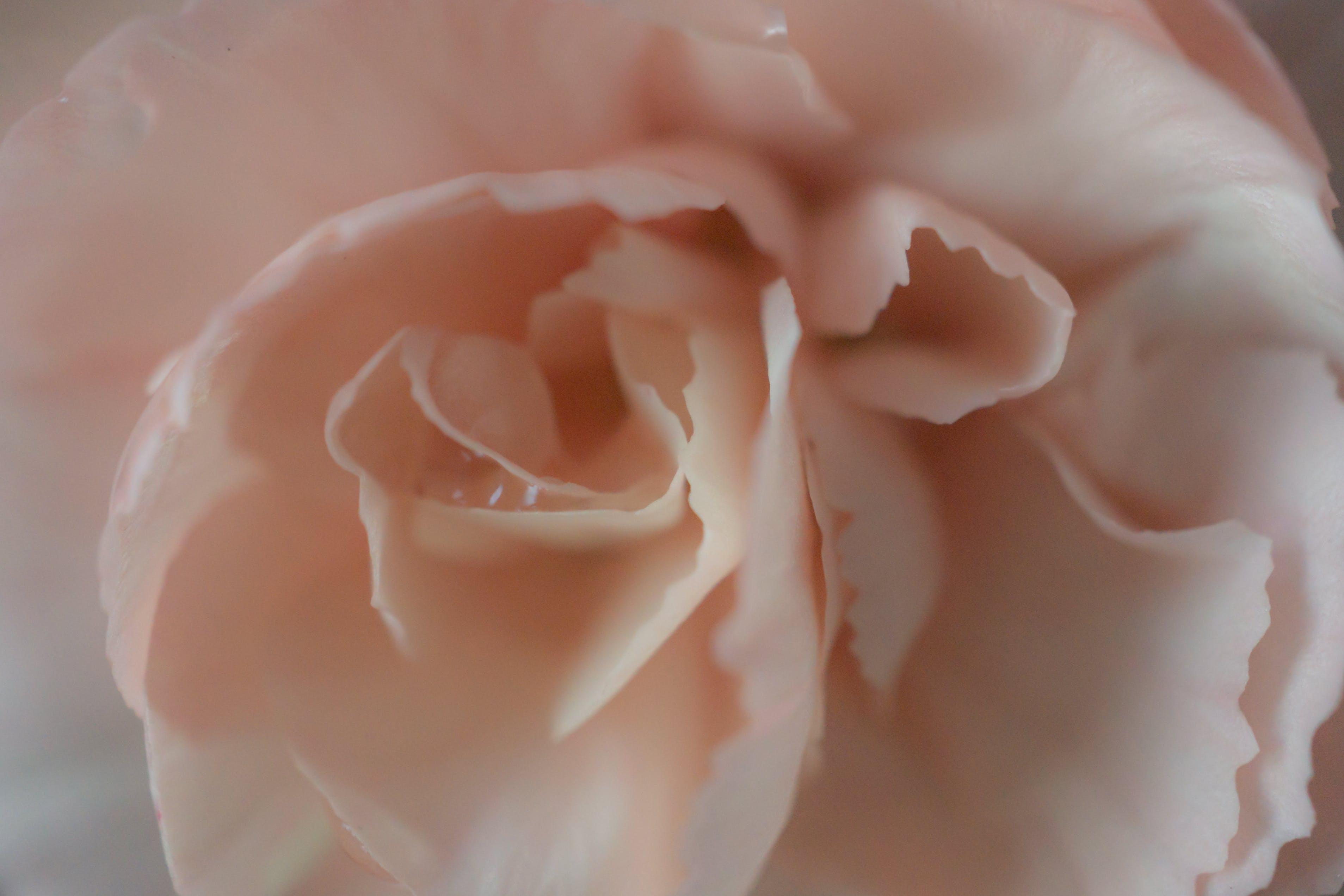 꽃, 로맨스, 부드러운, 분위기의 무료 스톡 사진