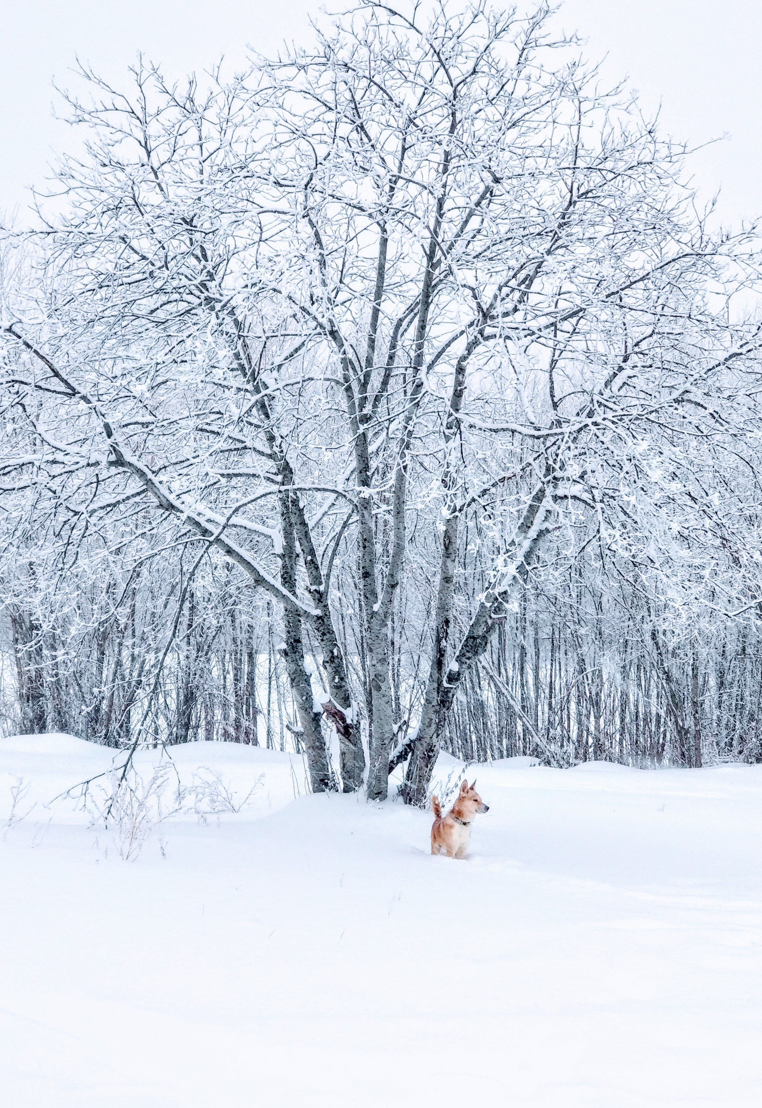 Brown Dog Standing on Snow Field Beside Bare Tree