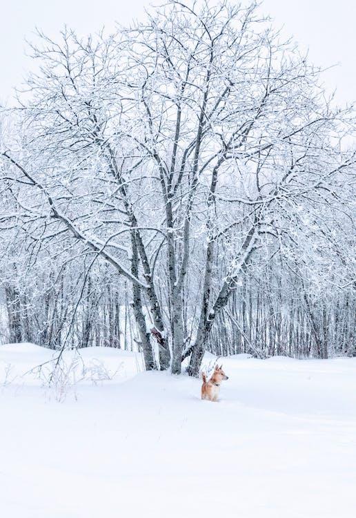 animal, árbol desnudo, arboles