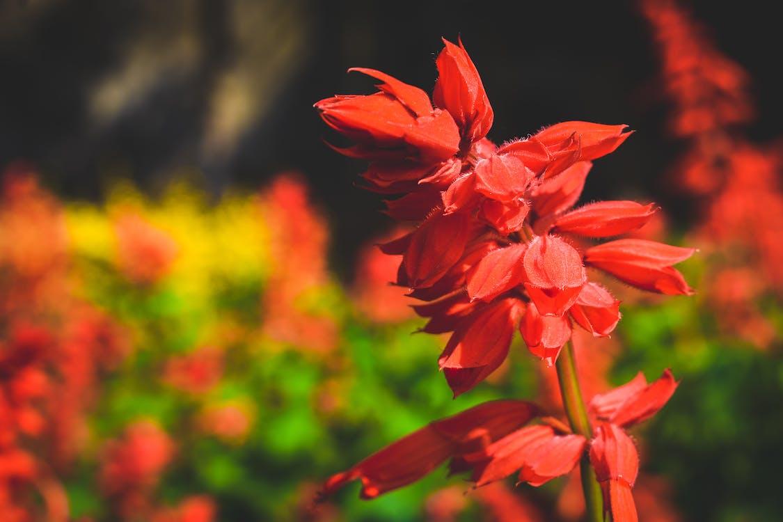 flor, flor bonita, flor vermelha
