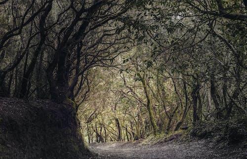 Základová fotografie zdarma na téma cesta, děsivý, horor, kanárské ostrovy
