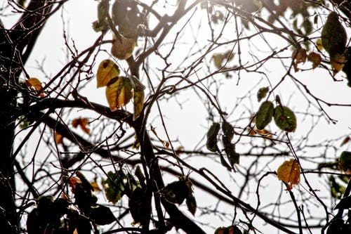 Foto d'estoc gratuïta de a pagès, alba, arbres, bassal