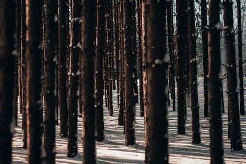 Gratis lagerfoto af skov, sort, træer, vinter