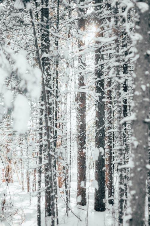 Gratis lagerfoto af sne, snefald, sneklædte, snelandskab