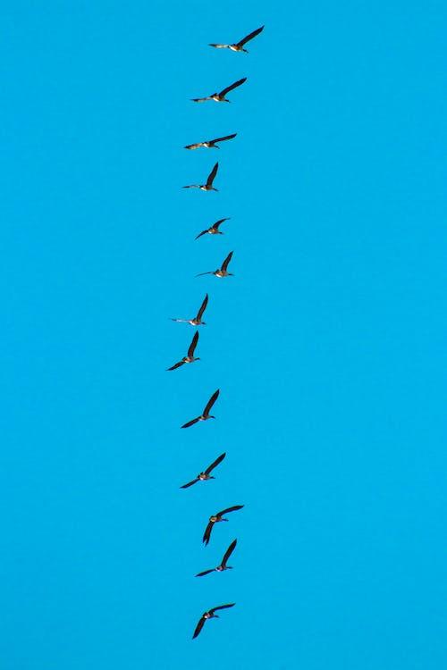 Gratis lagerfoto af blå, gæs, himmel, lodret